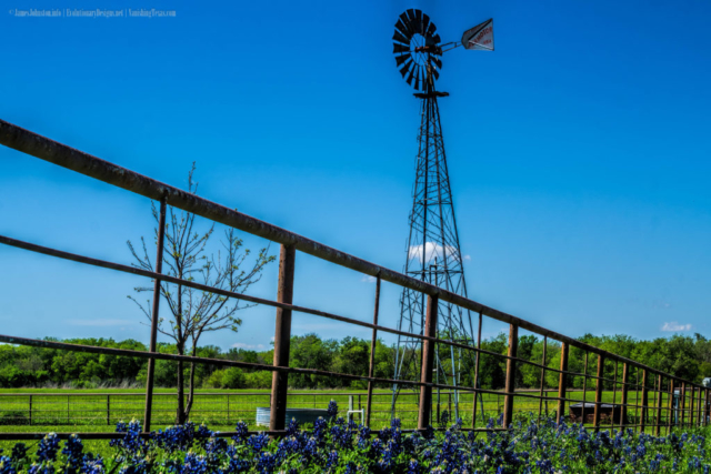 Old Windmill and Texas Bluebonnets in Ellis County